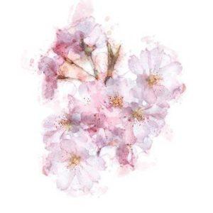 flower greetings card exclusive design pink